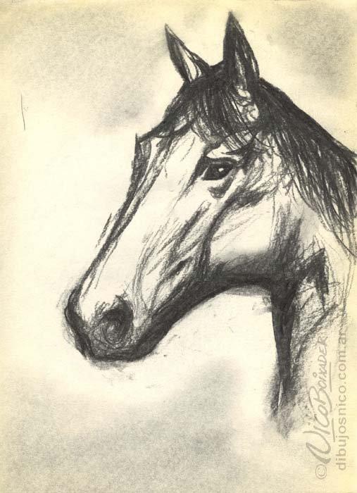 Ilustración Argentina caballo
