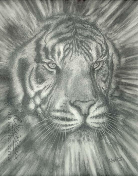 Ilustrador Argentina Tigre